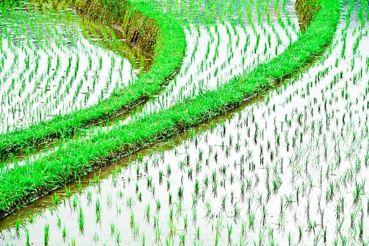 """""""A ogni singolo filo d'erba è destinata almeno una goccia di rugiada"""""""