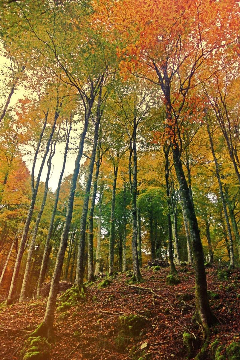 Riflessioni sull'autunno (passeggiando nei boschi del Cansiglio tra i bramiti dei cervi in amore e il profumo di funghi e castagne)